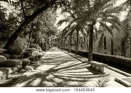Alley in the park of Palma de Mallorca. The deserted alley in the seaside town park on a sunny day. On either side flaunt various plants.