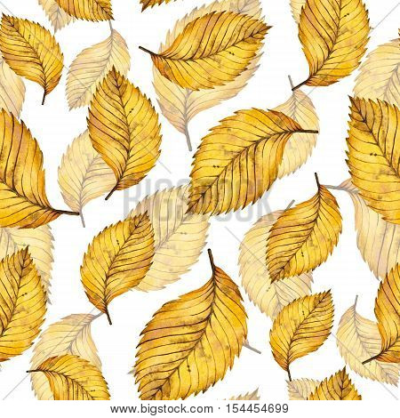 Watercolor autumn yellow leaves seamless pattern of elm, hand painted watercolour autumn background of falling leaf