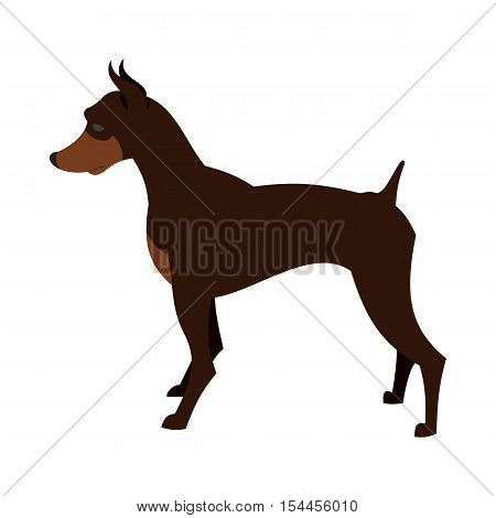 Doberman pincher dog breed for guard and security, vector illustration