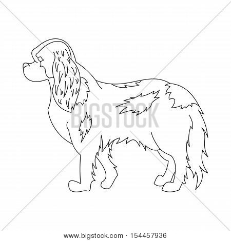 King cavalier charles spaniel. Line doggy pedigree, creative mammal, vector illustration