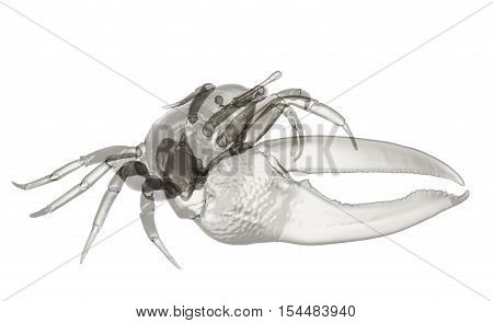 X-ray fiddler crab isolated.  Sea life background 3d render