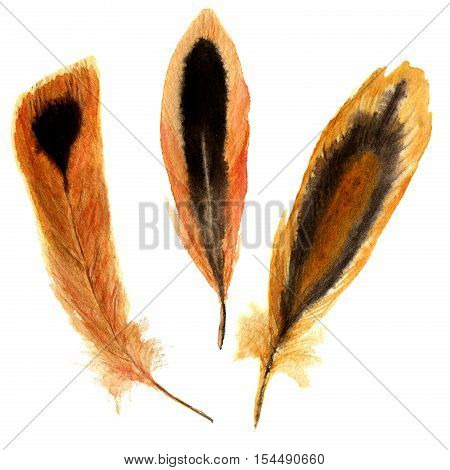 Hand drawn watercolor vibrant feather set. illustration feather with stripes and spots. isolated on white. Bird feather fly design for T-shirt, invitation, wedding card. Bright color