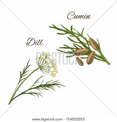 Dill, cumin spice herbs isolated vector icons. Aroma food and salad ingredient, condiment emblem of dill and cumin plants for packaging design, cuisine menu card, grocery shop, food market tag
