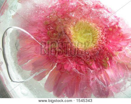 Flower Frozen In Time