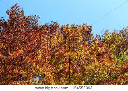 Colorful Leaves In Autumn And Blue Sky