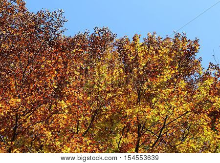 Elms Beeches And Other Trees With Beautiful Colorful Leaves In A