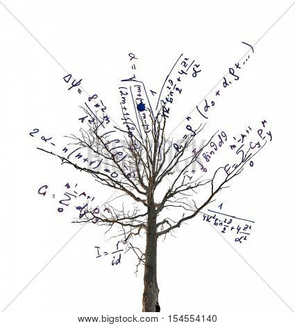 tree with mathematical equations isolated on white background