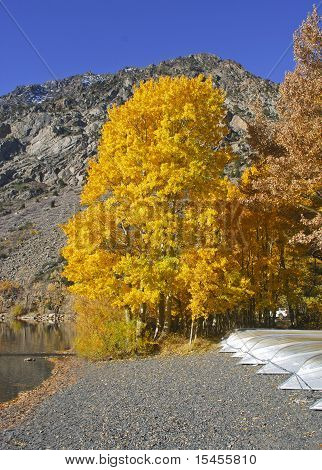 Golden Leaves Near Mountain And Lake
