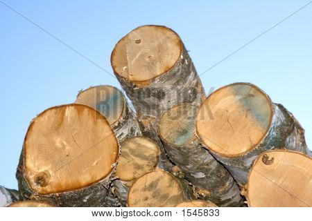 Piled Timber