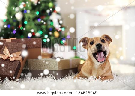 Cute puppy lying on carpet near Christmas gifts against blurred cozy interior background. Snowy effect, Christmas celebration concept.
