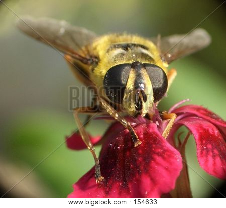Wasp...(11)