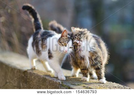 Two cute friendly cats on spring day
