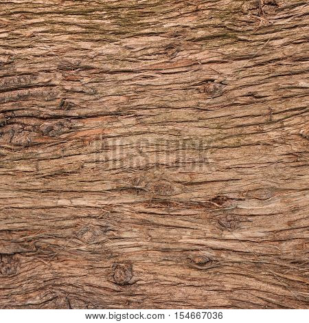 a wooden texture of a bark tree