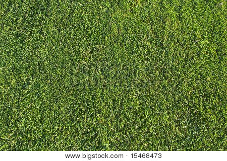 a green piece of a grass pattern