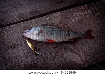 Perch caught on hard lures. Fish caught on a bait.