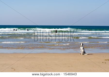 Watching The Surf