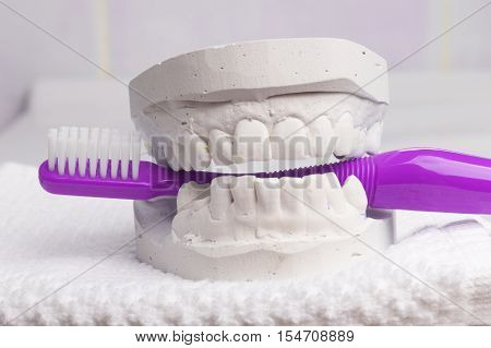 Oral hygiene health concept. Closeup violet toothbrush in dental gypsum model plaster