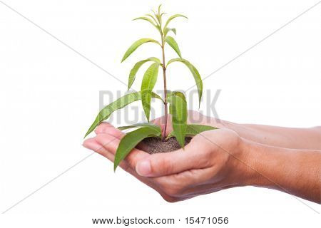 happy young woman holding a green plant with her hands (selective focus)