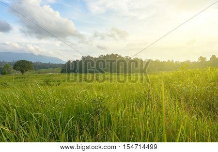 Picture of green grass field under rim light.