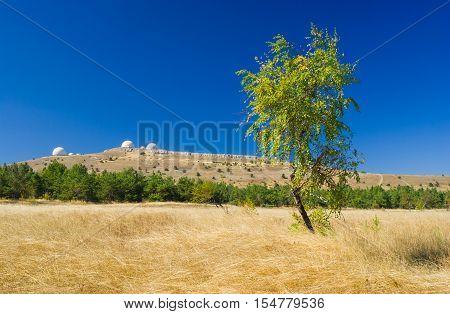 Beautiful autumnal landscape with lonely birch on Ai-Petri mountain tableland in Crimea Ukraine.