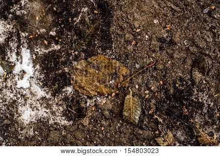 Yellow leaf on the asphalt, autumn, colors of autumn, fall, autumn pattern, autumn background, yellow leaves, autumn texture, fall back, autumn back, hello autumn grunge autumn background, ice, snow, early winter, grunge leaves