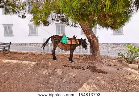 donkey the mean of transport at Hydra island Greece