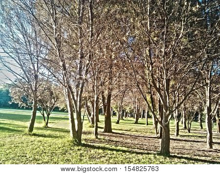 Scene of trees on a beautiful sunny afternoon