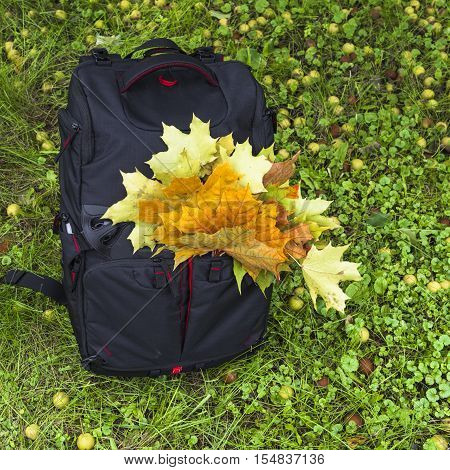 In the fall a photographer is in the backpack not only photographic equipment but also a picturesque bouquet of fallen leaves.