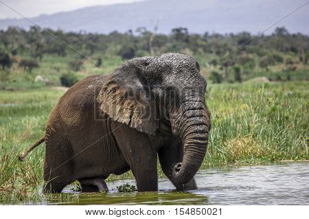 This Old Elephant