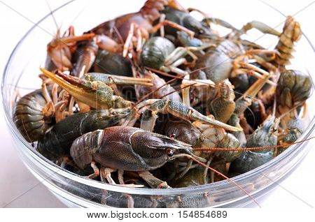 Fresh live crawfish in a glass container.