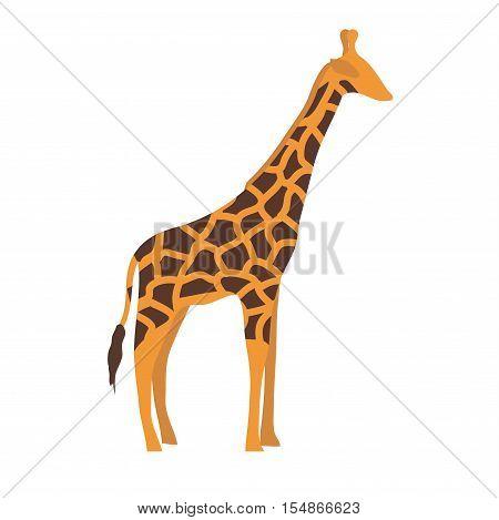 Ggiraffe cartoon vector illustration. Wild mammal safari giraffe slim neck zoo animal. Vector giraffe savanna portrait wilderness beautiful horned animal. Tropical mammal standing with long neck.