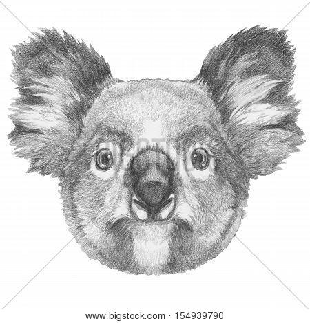 Original drawing of Koala. Isolated on white background.