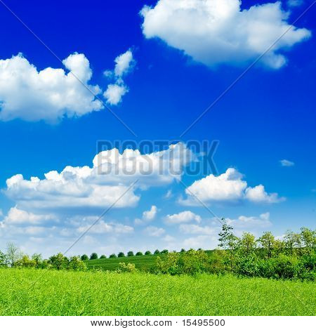 The tree, green field, blue sky. The rural landscape.