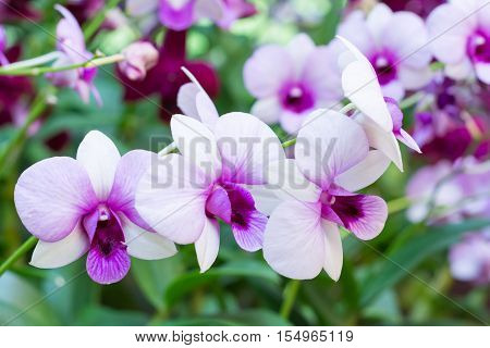 Beautiful orchid flowers. violet orchid in nature. purple orchid.