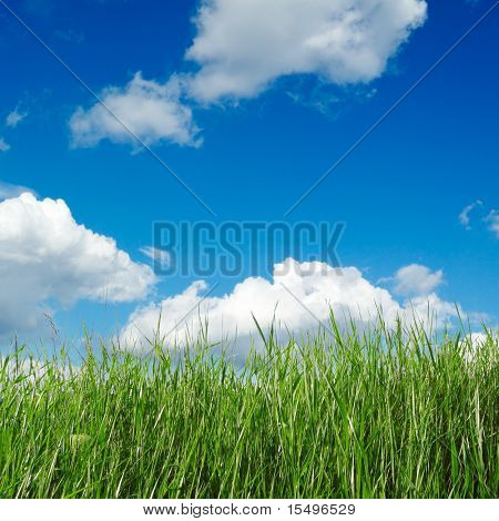green spring field covered by a grass and the beautiful blue sky