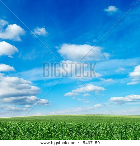 spring field covered by a grass and the blue sky