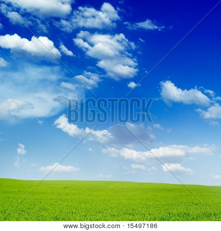 field covered by a grass and sky