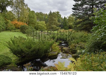 the small stream proceeding in the autumn woody park