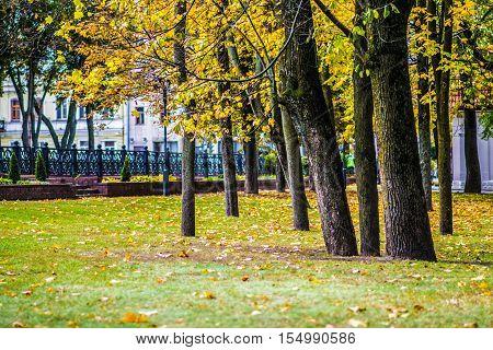beautiful autumn park. nature green wood sunlight backgrounds.