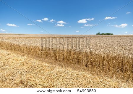 Straw in front of a partially already harvested, ripe wheat field