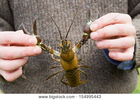 holding a signal crayfish by the claws