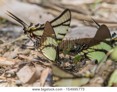 Colorful Butterflies In The Jungle