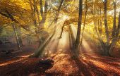 Autumn Forest In Fog With Sun Rays. Magical Old Trees poster