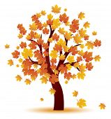foto of fall trees  - Autumn tree - JPG