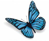 stock photo of blue butterfly  - Butterfly - JPG