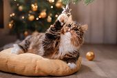 Tabby And Happy Cat. Christmas Season 2017, New Year, Holidays And Celebration poster