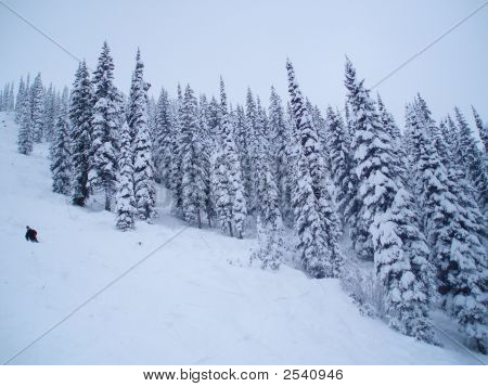 Trees On A Steep Ski Hill