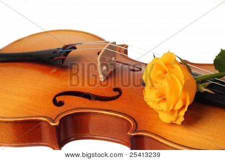 lovely rose on musical instrument