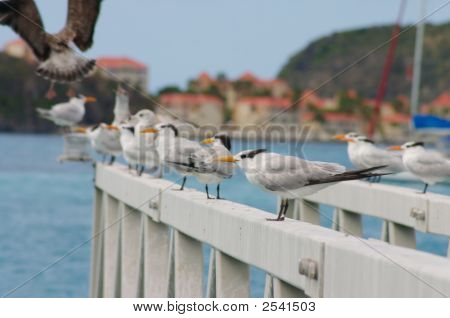 Seagulls On Bridge