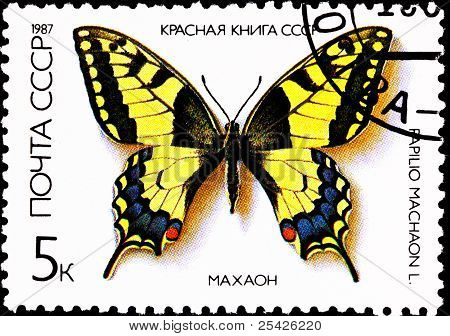 Old World Swallowtail Papilio Machaon